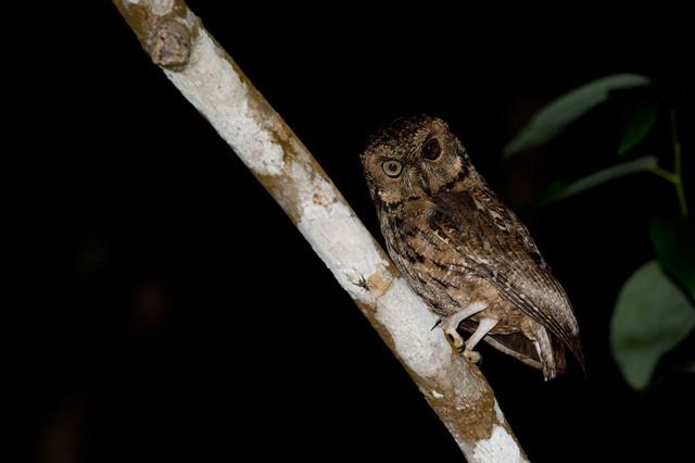 Recensement national pour évaluer les espèces en voie de disparition aux Seychelles