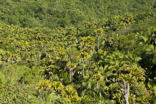 FAO supporting Seychelles with new National Forest Policy
