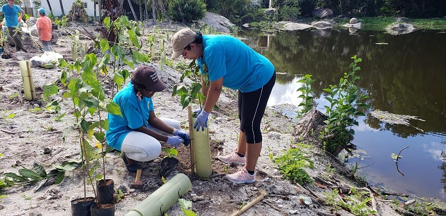 250 trees planted along marsh on Seychelles' main island to reduce impacts of climate change