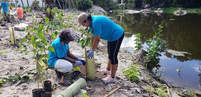 250 arbres plantés le long d'un marais sur l'île principale des Seychelles afin de réduire les impacts du changement climatique