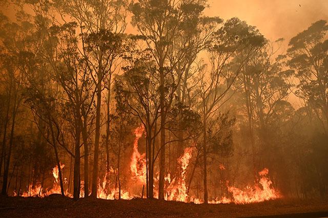 Incendies: Sydney menacée de coupures de courant après la destruction d'installations électriques