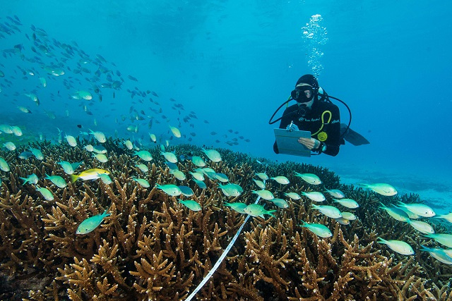 Soft coral around 2 Seychelles islands suffered less than feared in 2015-17 warming, study finds