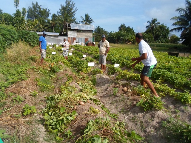 Limited land, technical support for farmers in Seychelles limits agricultural output, official says