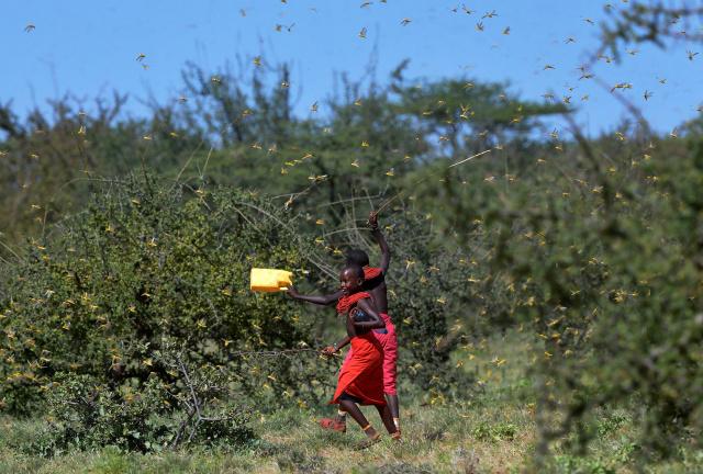 UN warns 'ravenous' locusts threatening East Africa