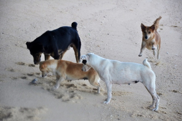 Start of Seychelles' Control and Protection of Dogs Act pushed back to January 2021