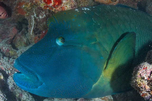 2 of Seychelles' islands found to be crucial habitat for endangered coral reef fish