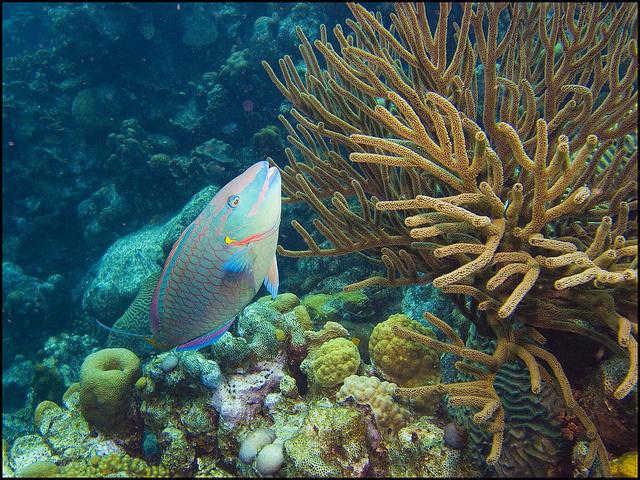 L'arrêt de la pêche pendant six mois, dans une zone des Seychelles, entraîne une croissance de 6 cm des poissons