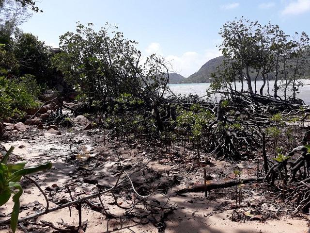 Efforts underway in Seychelles' Praslin Island to restore wetland, loss of biodiversity