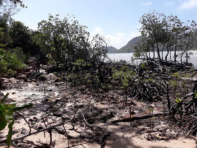 Efforts en cours sur l'île de Praslin aux Seychelles pour restaurer les zones humides