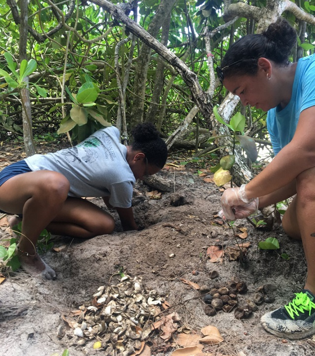 Teens in Seychelles can assist turtle monitoring programme, help fight poaching