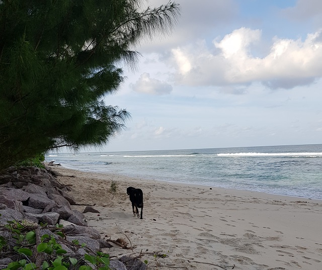 New plan will tackle climate change effects on north coast of Seychelles' main island