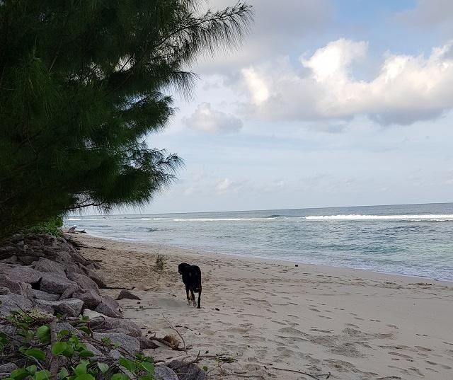 Un nouveau plan s'attaquera aux effets du changement climatique sur la côte nord de l'île principale des Seychelles