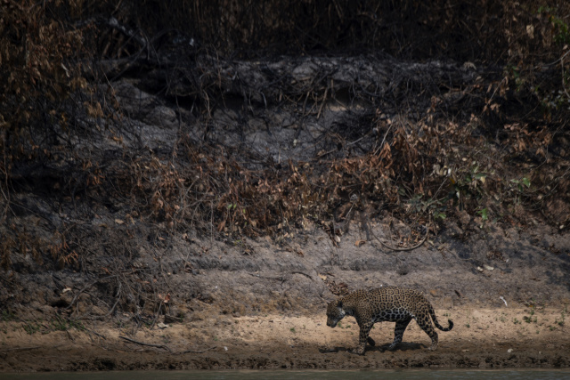 Race to rescue animals as Brazilian wetlands burn