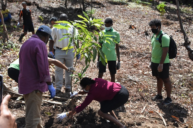 Seychelles planting hectares of fruit trees to increase food security