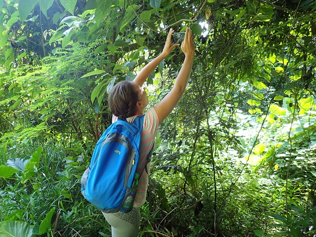 iNaturalist photo competition asks Seychellois to take pics of plants, animals