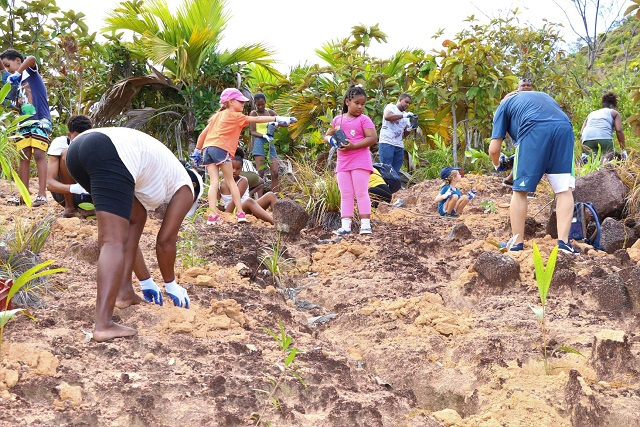Reforestation campaign in Seychelles on target to plant 250,000 trees
