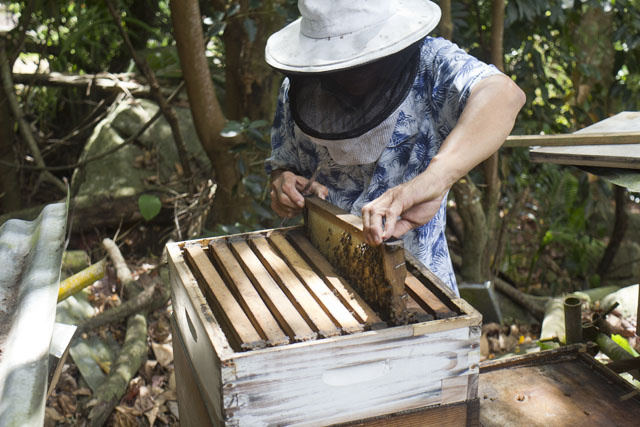 Beekeepers in Seychelles gain new training opportunities after agreement with Ministry of Agriculture