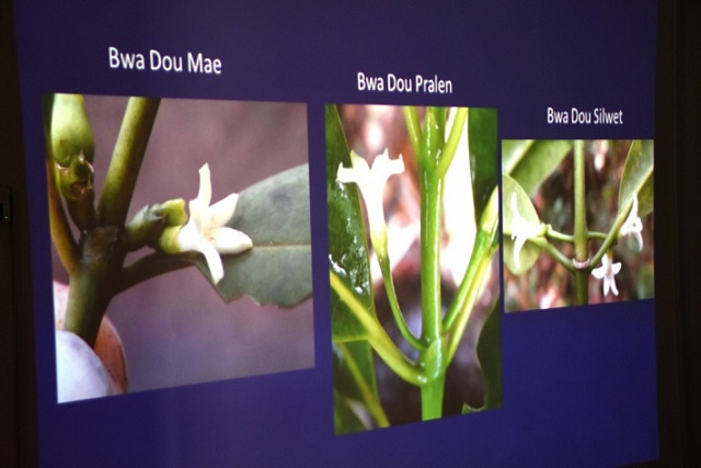 Study finds 2 new flowering plant species in Seychelles