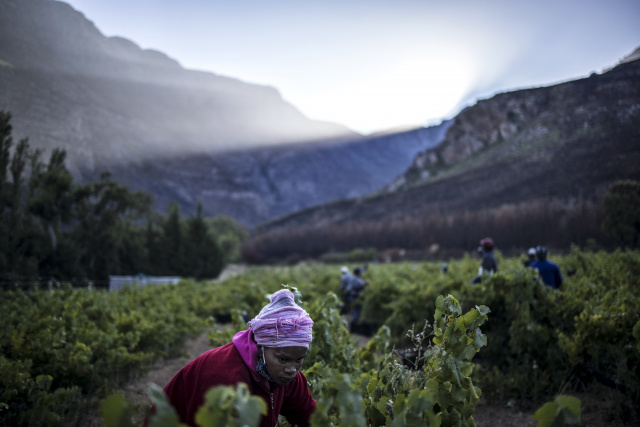 S.African wine 'paradise' finds success by going its own way