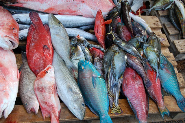 New research by Seychelles Fishing Authority to help with fish stock management