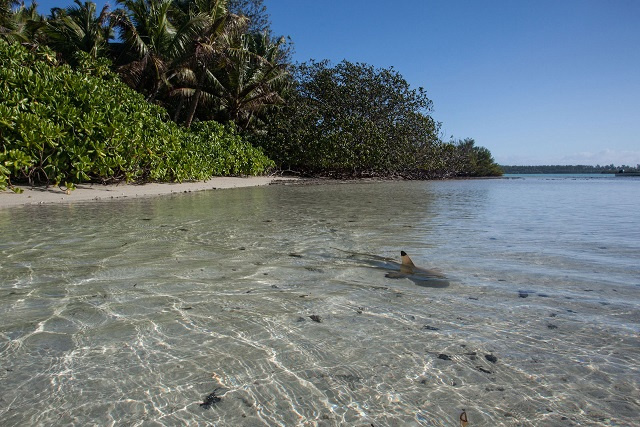 2 shark species in Seychelles keep peace by social distancing, study finds