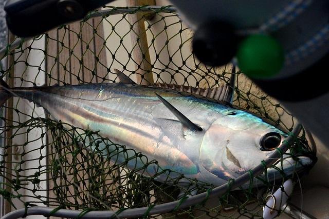 Les Seychelles et la CTOI se réunissent autour de la durabilité du thon