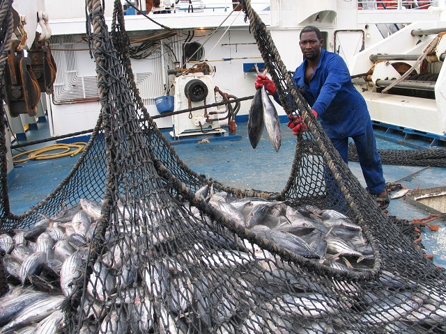 Seychelles disappointed after IOTC members delay decision on yellowfin tuna limits