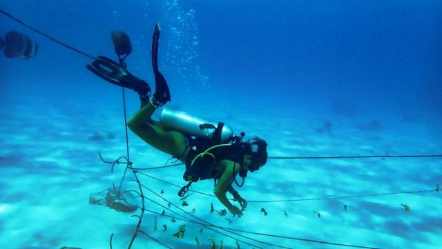 Marine Conservation Society Seychelles restoring reef at Ste Anne Marine National Park