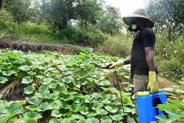 Seychelles' technology innovation institute develops solar-powered pesticide sprayer for farmers