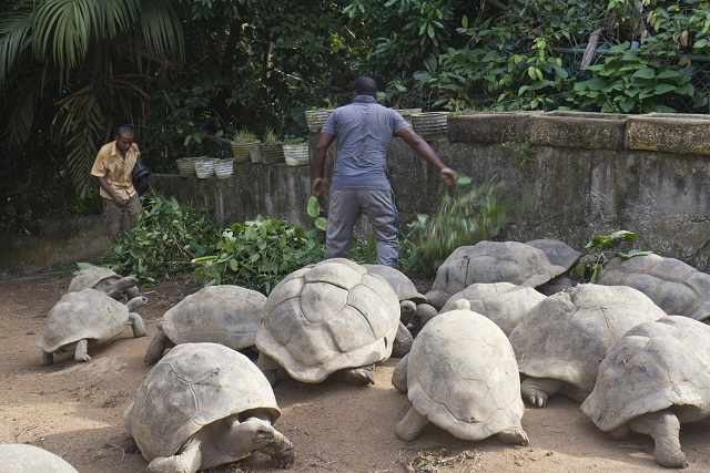 Seychelles to count, check up on giant tortoises being kept in captivity