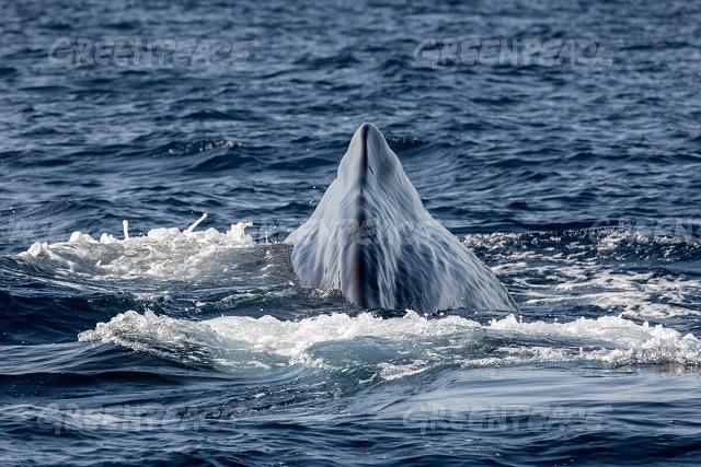 Endangered sperm whales, carbon-sink seagrass seen on trip near Seychelles