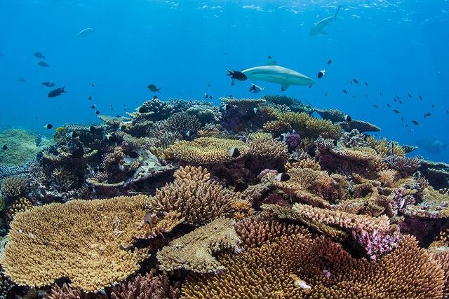 La loi sur la protection des animaux des Seychelles, datant des années 1960, est actualisée, en mettant l'accent sur les espèces marines