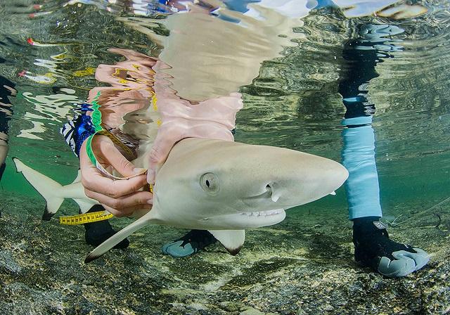 Appel aux chercheurs marins des Seychelles : Save Our Seas ouvre les demandes de subventions
