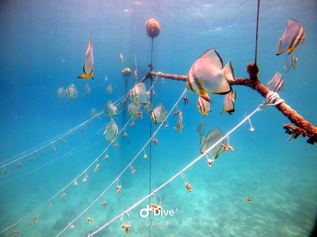Renovated coral nursery at Seychelles' Curieuse Island on target to rehabilitate 0. 5 hectares of coral reef