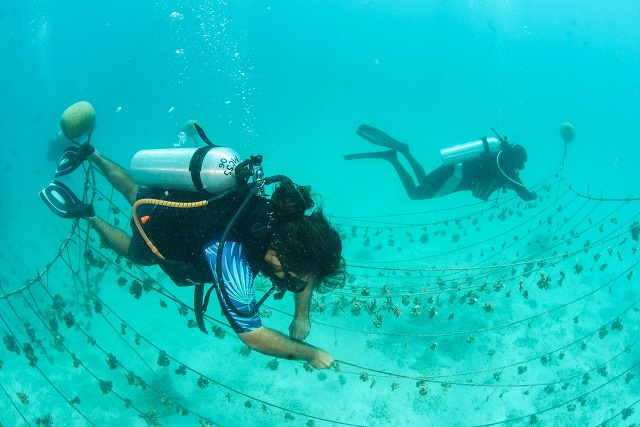 Marine Conservation Society Seychelles offering training to help restore coral reef at Ste Anne Marine Park