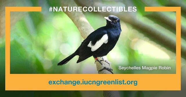 Nature Seychelles selling magpie robins via next-wave platform: NFTs
