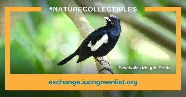 Nature Seychelles vend des pies chanteuses via la nouvelle plate-forme: NFT