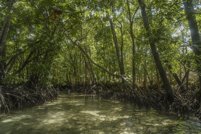 Bucking global trend, mangroves expanding on Seychelles' Aldabra Atoll, study finds