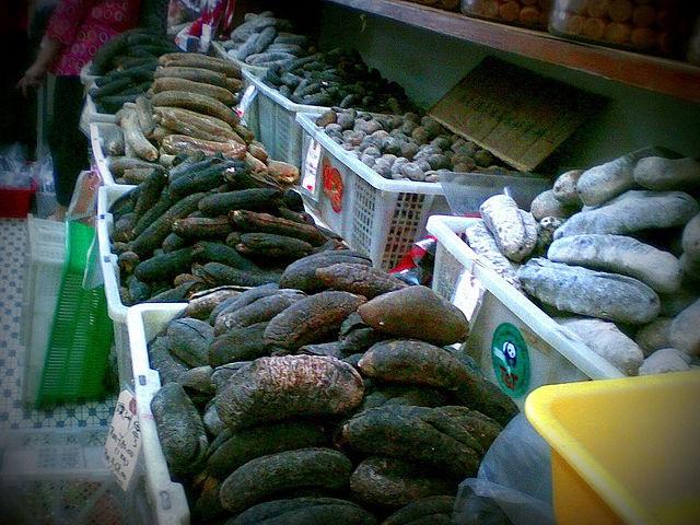 Ouverture de la saison des concombres de mer aux Seychelles, avec une légère réduction du quota