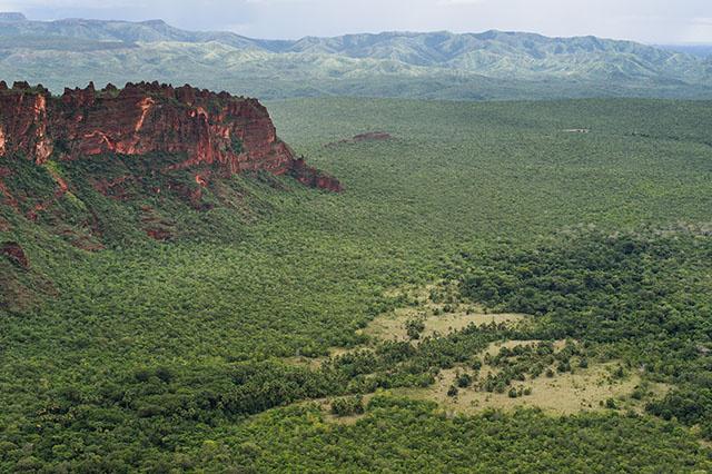 """""""Liste rouge"""" UICN: près de 30% des espèces étudiées menacées"""