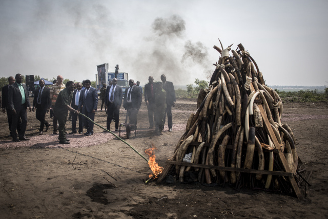 Armed groups benefit from poaching, logging in Congo reserve, say NGOs