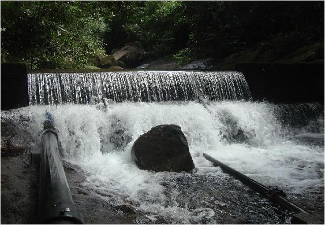Le projet d'un nouveau barrage aux Seychelles suscite des inquiétudes quant à l'impact sur un arbre rare et unique