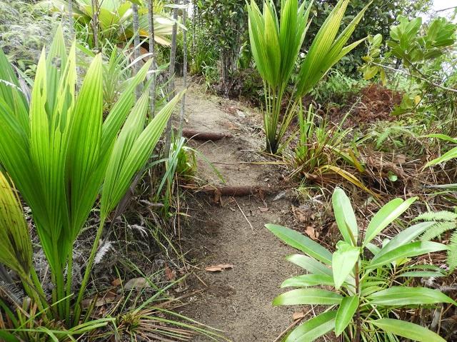 US Embassy grant to help group restore Tea Tavern Trail on Seychelles' main island