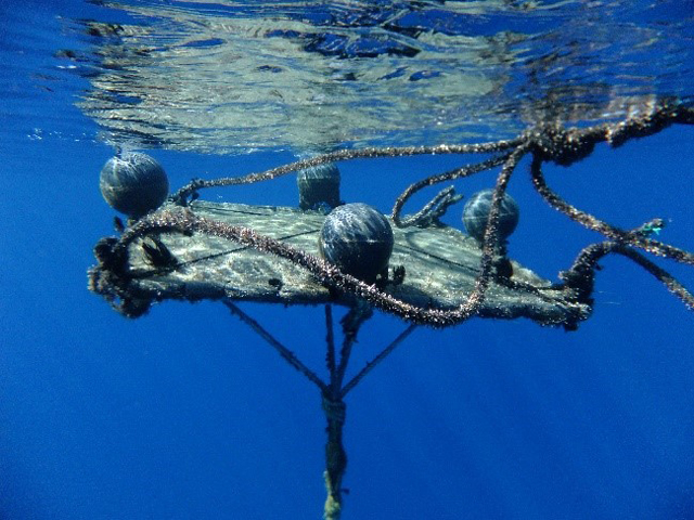 Fad watch seychelles to intercept fishing devices to for Fish aggregating device