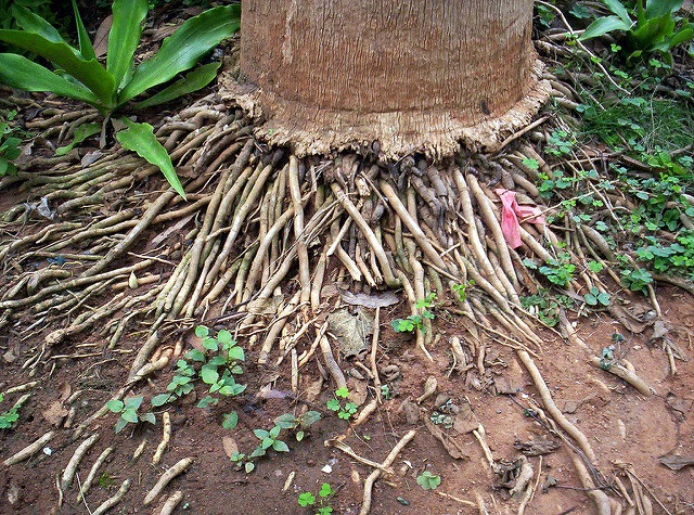 Path on Uses Of Coconut Tree Parts